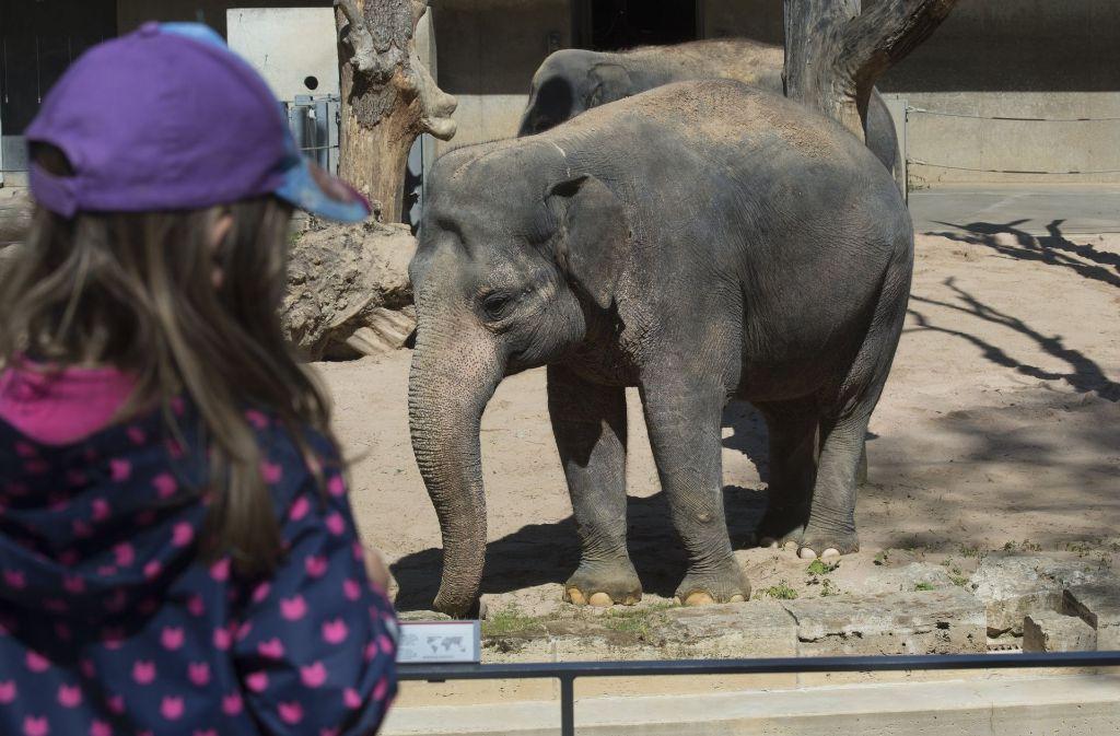 """In einer """"Elefantenwelt"""" im Stuttgarter Zoo sollen bis zu 14 Tiere gehalten werden. Der Schaubauernhof muss allerdings weichen. Foto: dpa"""