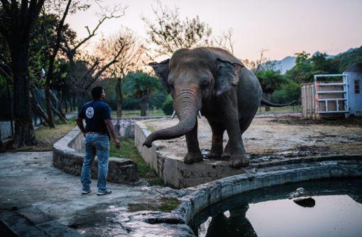 """Bislang """"einsamster Elefant der Welt"""" bleibt nicht lang allein"""