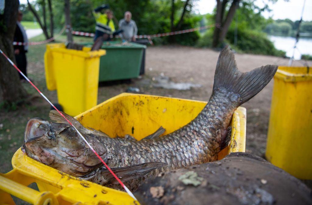Die toten Fische vom Stuttgarter  Max-Eyth-See werden in Containern gesammelt. Foto: dpa