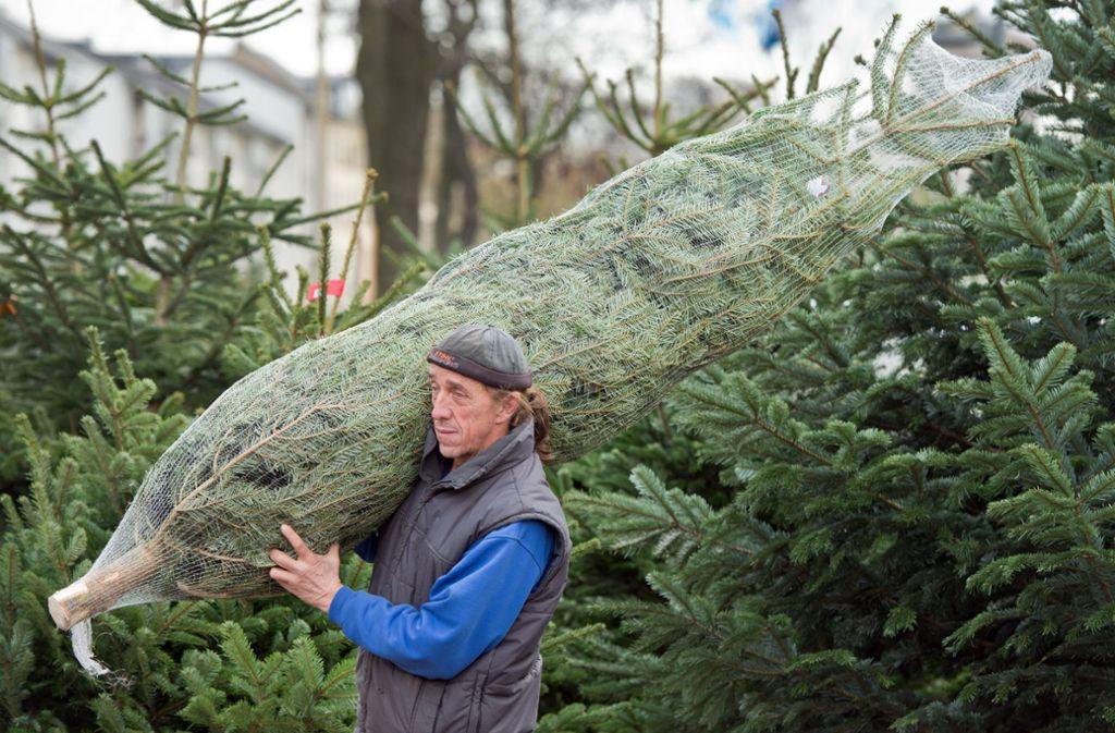Ein Christbaum gehört für viele zum Weihnachtsfest dazu. Foto: dpa