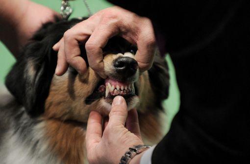 Hund verbeißt sich in Dreijähriger und verletzt sie schwer