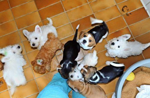 250000 Euro Pflegekosten für gerettete Tiere