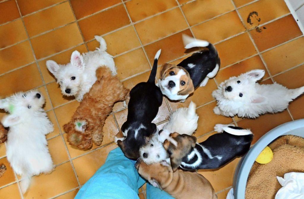 Im April nahm das Tierheim auf einen Schlag 116 Tierbabys auf. Foto: Tierheim Stuttgart/Archiv