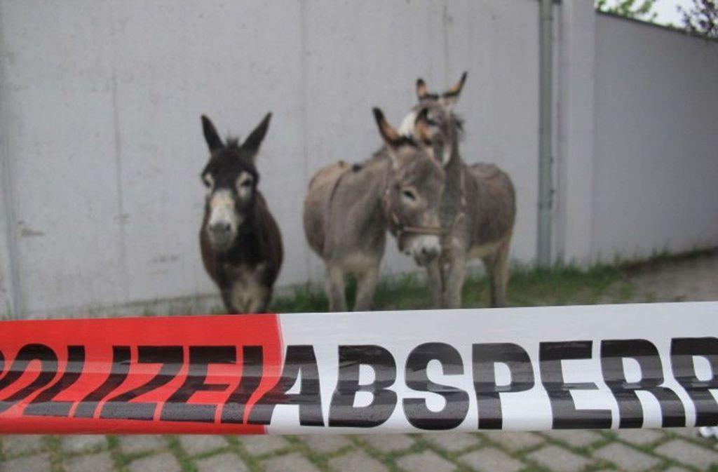 Im Allgäu musste die Polizei als Tierpfleger einspringen. Foto: PI Lindenberg