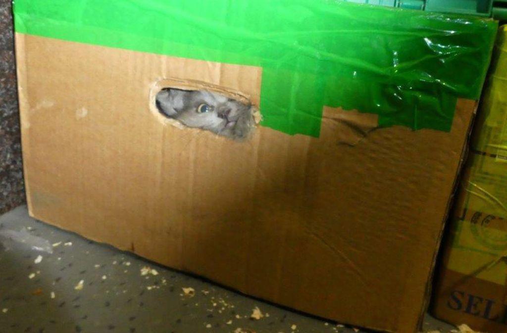 Die 26 Katzen waren in einem Kleintransporter unter Gepäck eingepfercht. Foto: Hauptzollamt Ulm