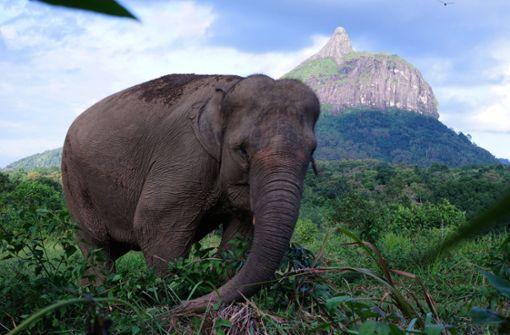 Seltener Elefant tot und mit entferntem Rüssel gefunden