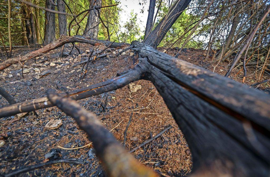 In Malmsheim brannten unter anderem  Bäume, eine Grillgesellschaft hat wohl nicht richtig aufgepasst. Die Feuerwehr konnte Schlimmeres verhindern. Foto: factum/Granville