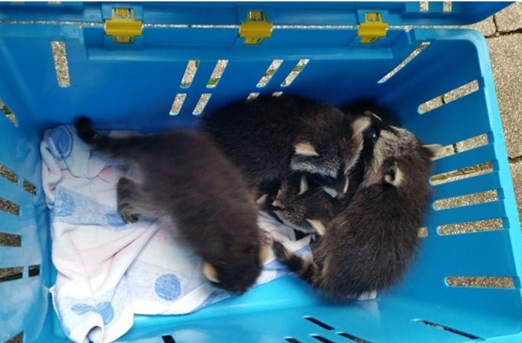 Die Tierrettung rückt für Tiere in Not aus. Zwischenmenschlich brodelt es jedoch in dem Verein. Foto: Tierrettung