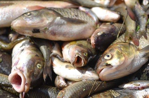 Im Sommer 2015 verendeten tonnenweise Fisch in der Jagst. Foto: dpa