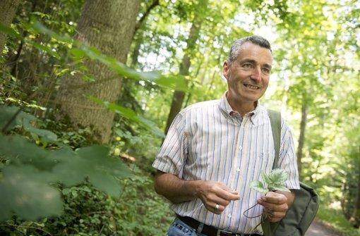 Markus Strauß ist ständig  im Wald unterwegs. Welche Wildpflanzen es zu finden und entdecken gibt, zeigt die Bilderstrecke. Foto: Martin Stollberg