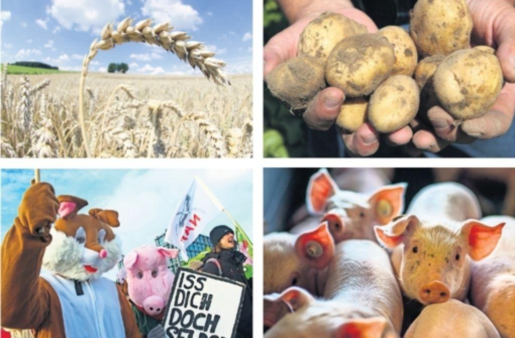Ob Brot, Kartoffeln oder Fleisch – ohne die Arbeit der Bauern lieben viele Teller  leer. Doch in der Öffentlichkeit steht die Landwirtschaft immer heftiger in der Kritik. Foto: dpa (3), epd