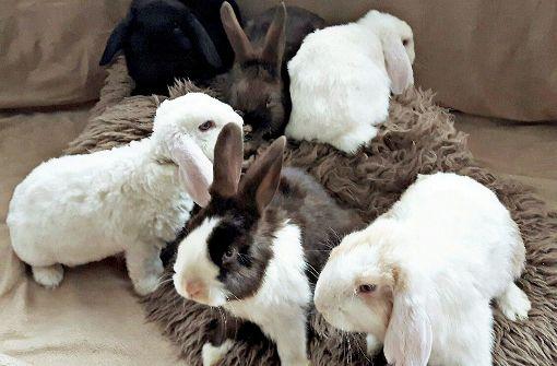 Kaninchen im Altglascontainer entsorgt