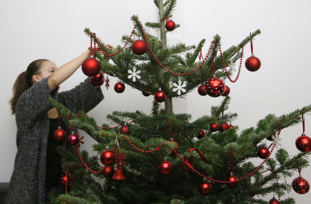 """""""Tannenbaum, o Tannenbaum, wie treu sind deine Blätter."""" Wussten Sie, dass bis zu 25000 Insekten auf einem Christbaum leben und ins Haus eingeschleppt werden? Foto: dpa"""