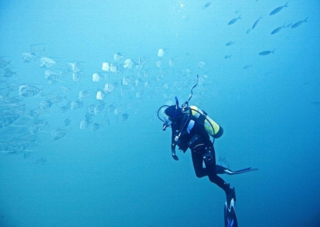 Die Biologin Molly Cummings    untersucht Bodengucker-Makrelen. Foto: Erich Schlegel