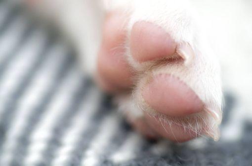 Zoll entdeckt fast 100 Hundewelpen in Kleintransporter