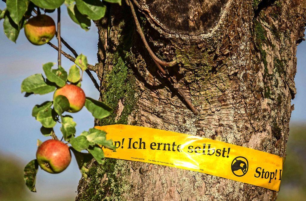 Nach einem Jahr Arbeit freut sich der Wiesenbesitzer    über eine gute Ernte  – sofern ihm nicht Diebe  die Früchte seines Fleißes stehlen. Foto: /Frank Rumpenhorst