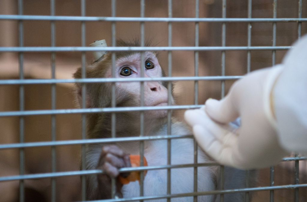 Deutsche Autobauer sollen Tierversuche finanziert haben (Symbolfoto). Foto: dpa