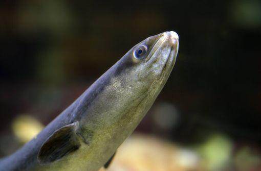 Diese Tiere schwimmen mit Ihnen im Badesee