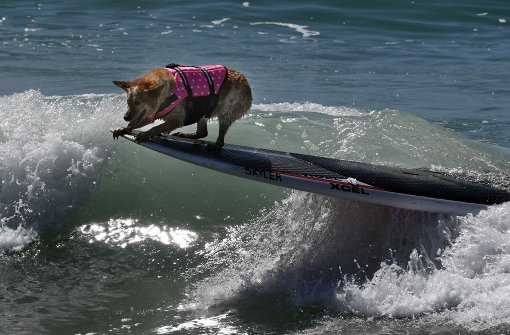 Diese Vierbeiner bezwingen die Wellen