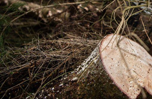 Ermittlungen gegen Waldarbeiter eingestellt