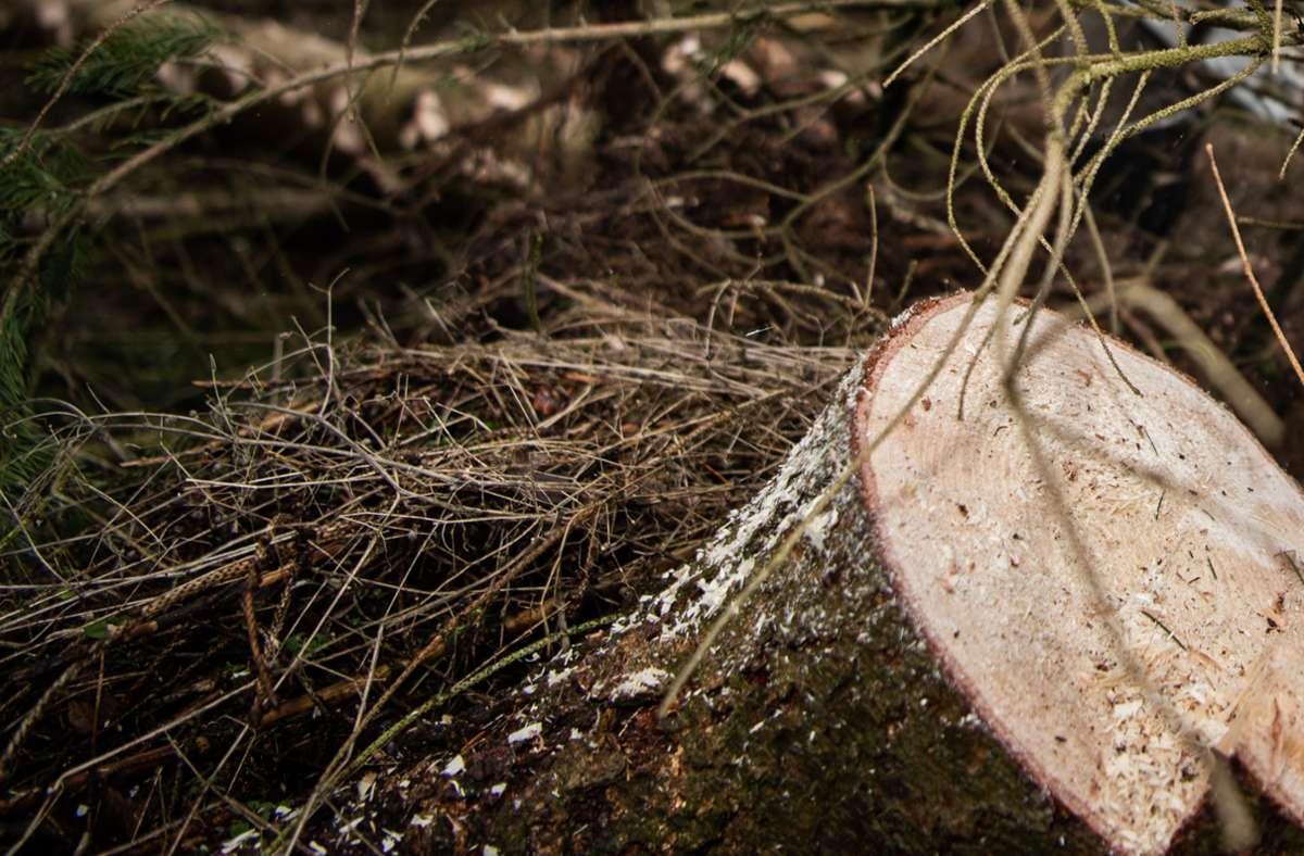 Der Fall um die angeblich geschredderten Jungfüchse hatte in Baden-Württemberg und in Rheinland-Pfalz für Aufregung gesorgt (Symbolfoto). Foto: picture alliance/dpa/Andreas Arnold