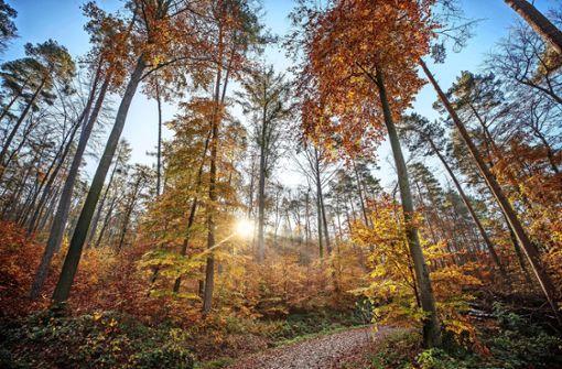 Wie der Wald die Seele streichelt
