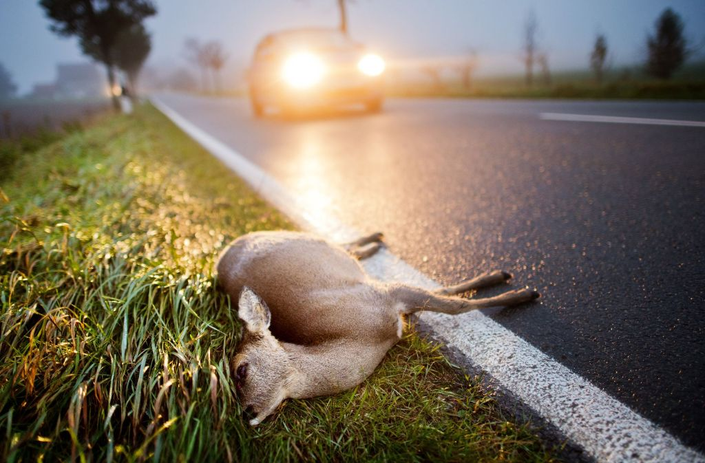 Mehr als 228 000 Wildunfälle hat es im vergangenen Jahr in Deutschland gegeben. Foto: dpa