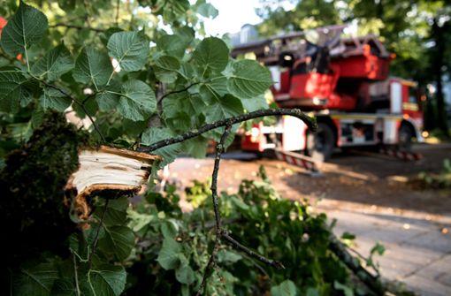 Feuerwehr befreit Kind aus Baum