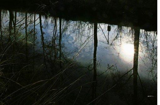 Durch Wald und Wies' am Buchenbach