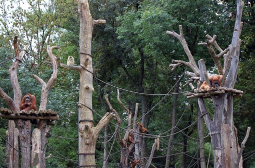 Vorbild für die Wilhelma: die Menschenaffenanlage Pongoland Foto: Zoo Leipzig