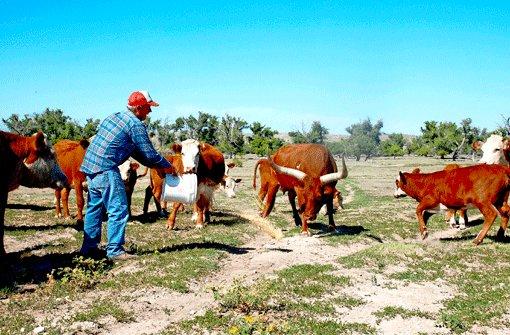 Jake Fast (76) aus Guymon in Oklahoma ist ein typischer Farmer und stolz auf alles, was dieses weite Land hergibt. Auf seine Rinder, die Weiden, die Bäume. Foto: SoAk