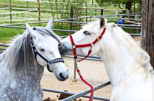 Den Pferdesport plagt seine eigene   Seuche