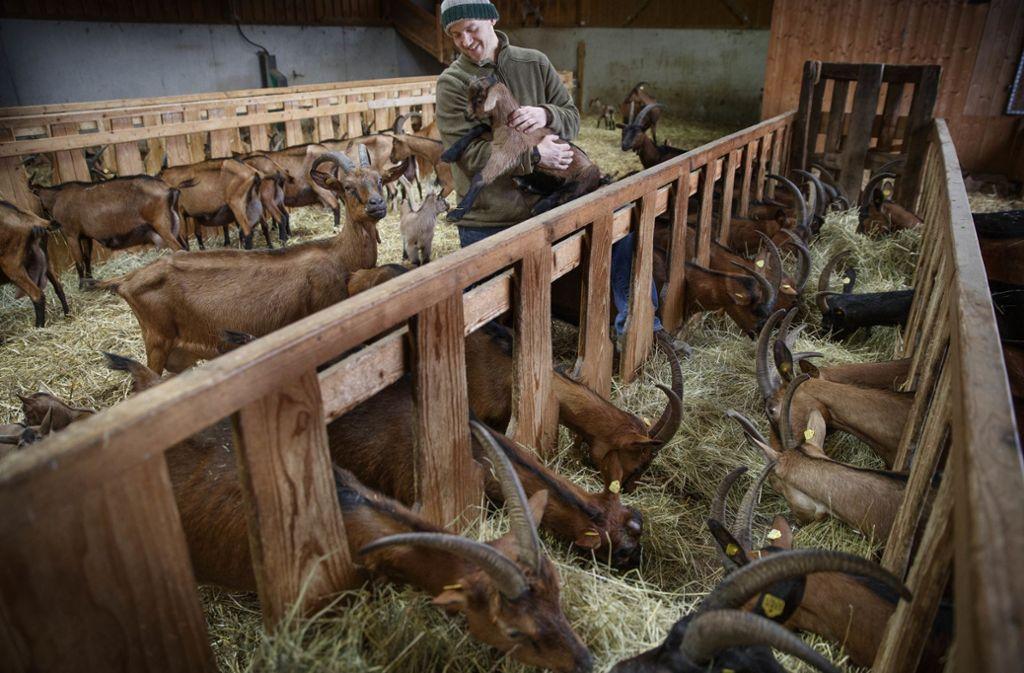 Seit rund vier Jahren kann Simon Kohl von seinem Ziegenhof leben. Foto: Gottfried Stoppel