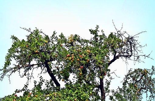 Bäume vergreisen, Früchte sind zu billig
