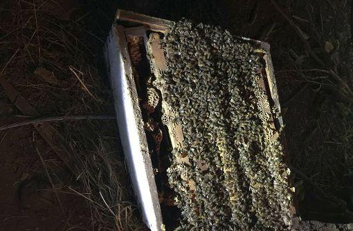 Eine Millionen Bienen nach Lkw-Unfall getötet