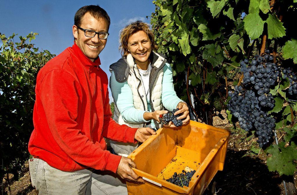 Andreas Raab und Ramona Fischer  freuen sich über   ihre Merlot-Trauben. Foto: