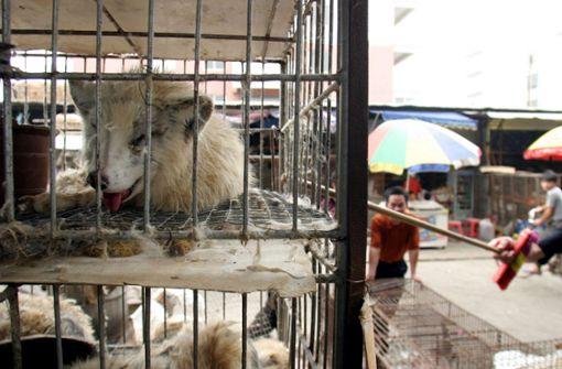 Wildtiermärkte in Asien –  Brutstätten für Krankheiten