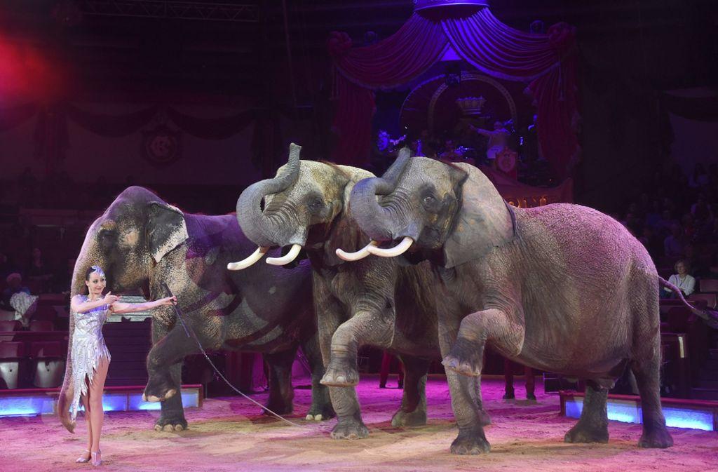 Die Elefanten soll zum Weihnachtsprogramm in den Circus Krone zurückkehren. Foto: dpa/Felix Hörhager
