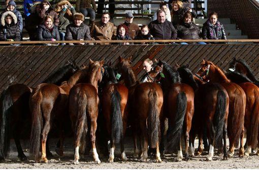 Keller, Live-Musik und ganz viele Ponys