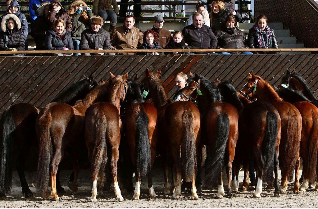 Den Ponys und Kleinpferden gehört am Sonntag die große Bühne im Reiterstadion. Foto: factum/Bach