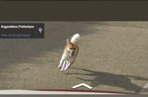 Hund verfolgt Auto von Google-Maps