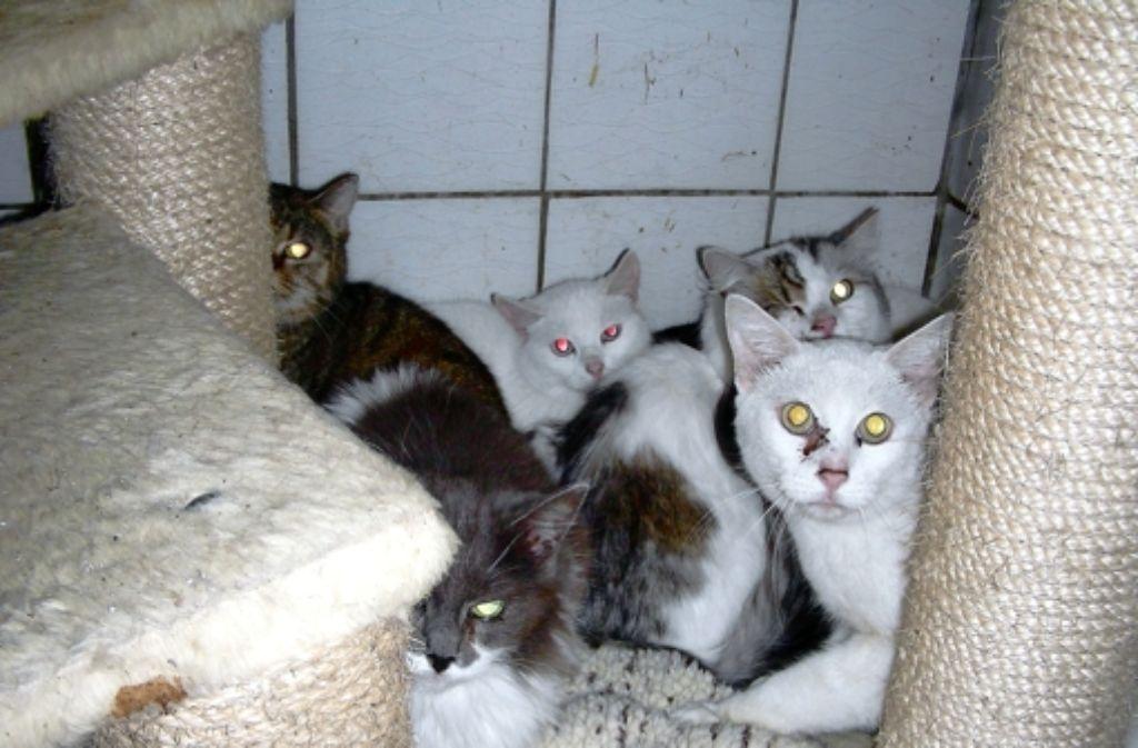 Einige wenige der geretteten Katzen im Tierheim Obere Roggenmühle. In der Fotostrecke sehen Sie weitere der 30 geretteten Tiere. Foto: privat
