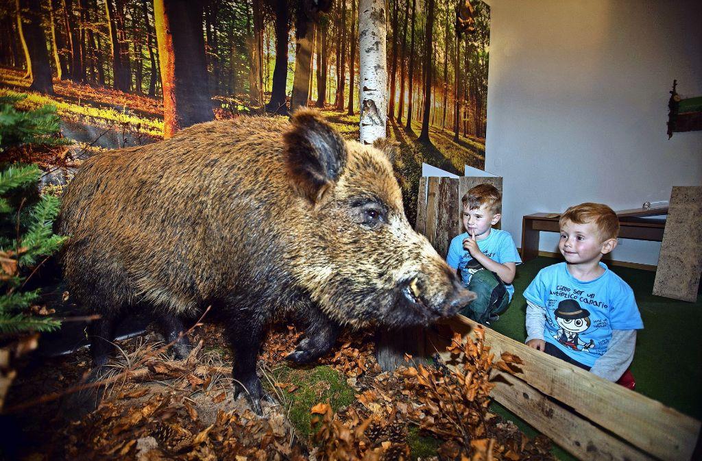 Wildschweine gehören zu den kräftigsten und am wenigsten beliebten Wanderern vom Wald in die Stadt. Foto: Ines Rudel