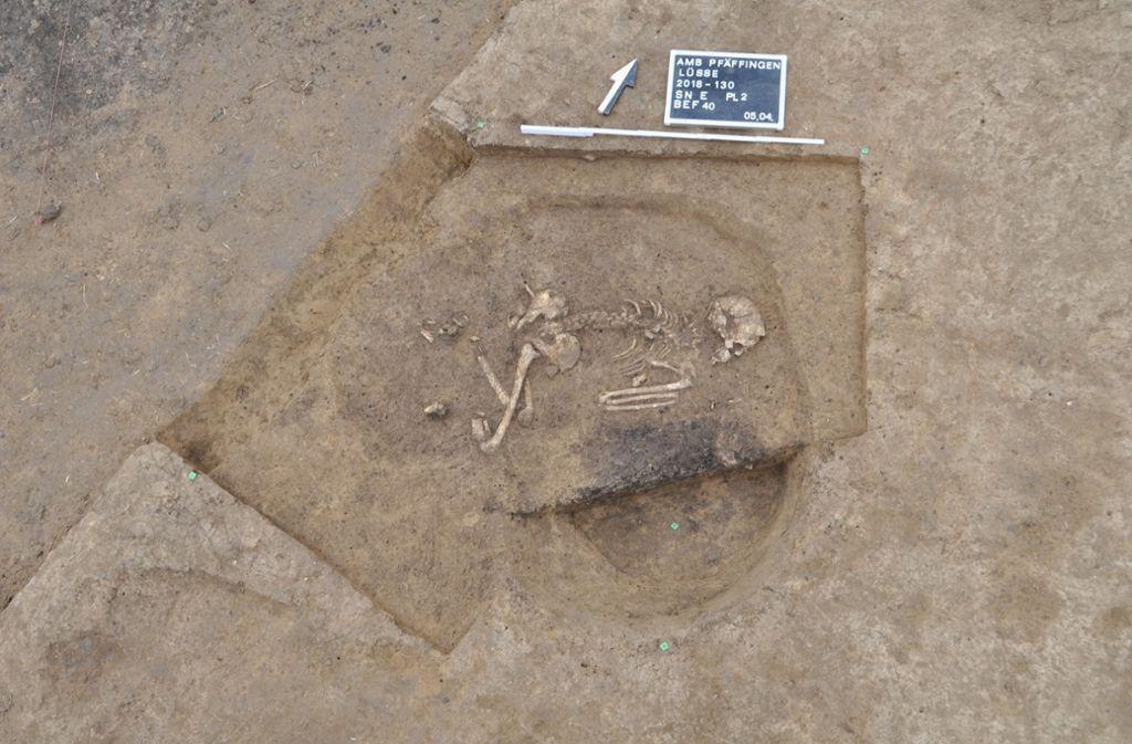 Grabensystem eines jungsteinzeitlichen Dorfes im Kreis Tübingen. Foto: dpa/L. Brandstetter