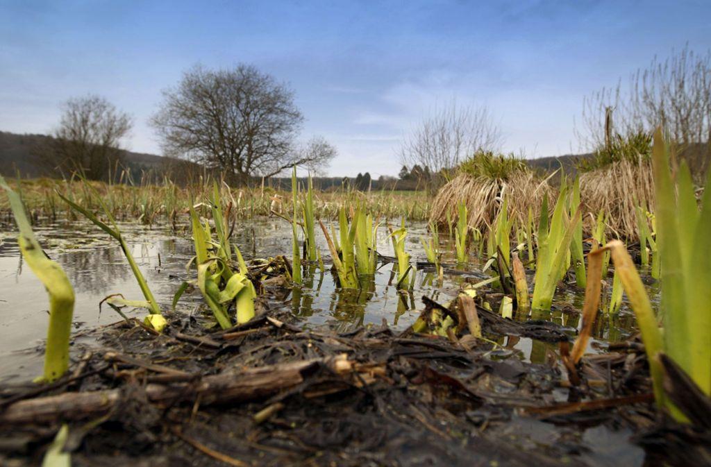 Tipp 16: Bei Lenningen liegt das einzige größere Hochmoor der Schwäbischen Alb, das Schopflocher Torfmoor. Bis ins 20. Jahrhundert hinein wurde hier Torf abgebaut - dass das Moor bereis in den 1940er Jahren zum Naturschutzgebiet ernannt wurde, war seine Rettung. Über einen Schwellenweg kann man heute durch das Torfmoor gehen und sich seine besondere Flora und Fauna ansehen. Mehr Infos im Netz Foto: Horst Rudel