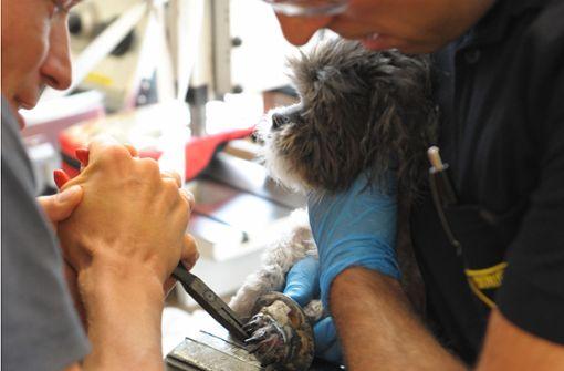 Feuerwehr befreit eingeklemmte Hundepfote mit Zange und Säge