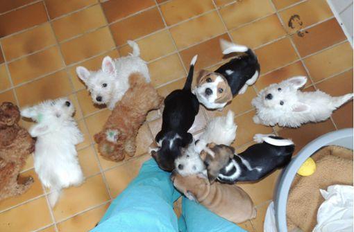 Tierschutzbund kritisiert Ebay Kleinanzeigen