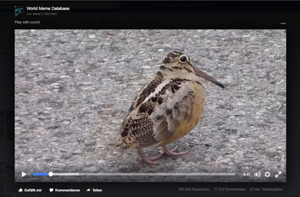 Der Vogel in diesem Video läuft ziemlich ruckelig – und ist dabei tierisch witzig. Foto: Screenshot Facebook / World Meme Database