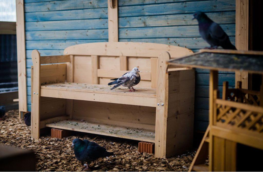In Böblingen finden verletzte Tauben Zuflucht im Tauben-Hospiz. Foto: dpa