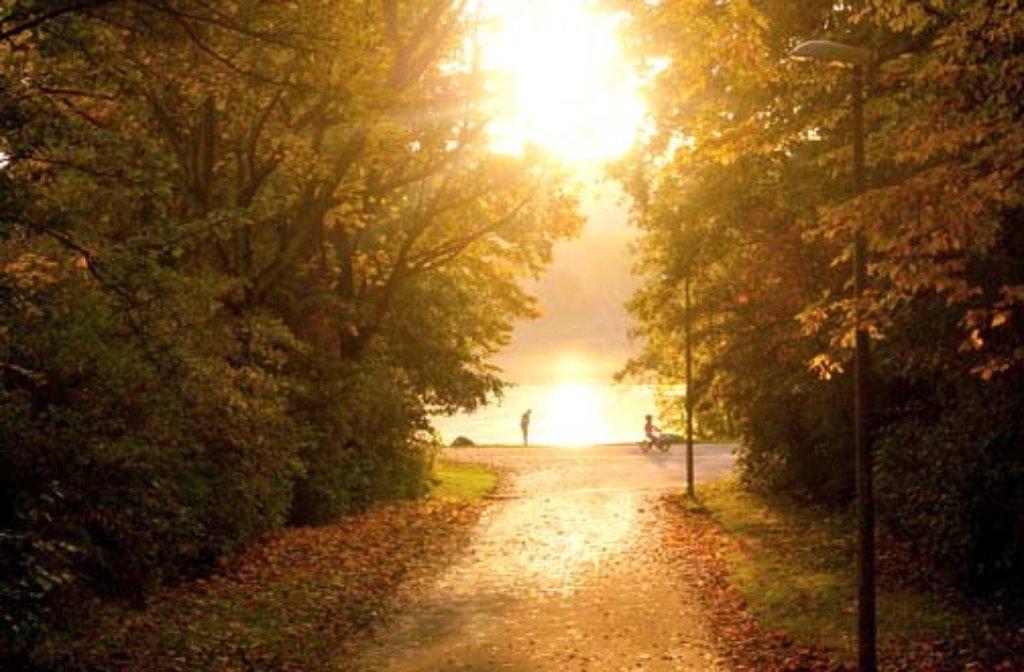 Der Herbst hat Einzug gehalten in Stuttgart und der Region - Menschen wie Tiere genießen die wärmenden Sonnenstrahlen der dritten Jahreszeit. Auch am Max-Eyth-See hinterlässt der Herbst einen goldenen Schimmer. Weitere Herbst-Impressionen gibt es in unserer Fotostrecke - klicken Sie sich durch! Foto: Leserfotograf chrisho